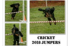 2018-CRICKET-JUMPERS