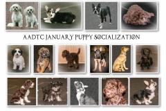 JANUARY-PUPPIES-1