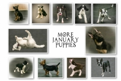 JANUARY-PUPPIES-2