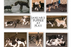 JANUARY-PUPPIES-AT-PLAY