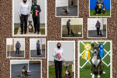 WHIRLEY-2020-AADTC-OCTOBER-OBEDIENCE-RALLY-TRIAL